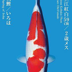 De Tategoi Kai: afbeelding 5