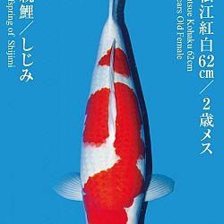 De Tategoi Kai: afbeelding 7