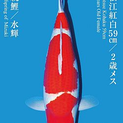De Tategoi Kai: afbeelding 8