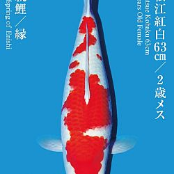 De Tategoi Kai: afbeelding 9