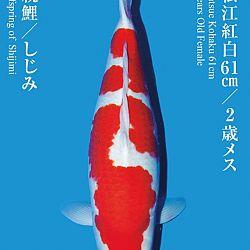 De Tategoi Kai: afbeelding 10