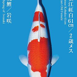 De Tategoi Kai: afbeelding 11
