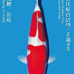 De Tategoi Kai: afbeelding 12