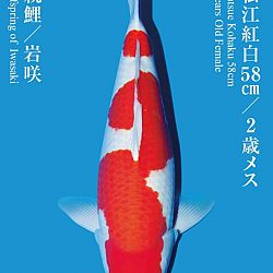 De Tategoi Kai: afbeelding 13