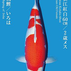 De Tategoi Kai: afbeelding 14