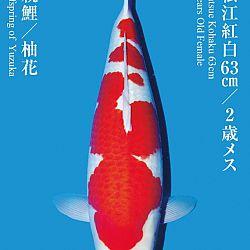 De Tategoi Kai: afbeelding 15