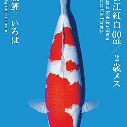 De Tategoi Kai: afbeelding 16