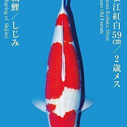 De Tategoi Kai: afbeelding 17