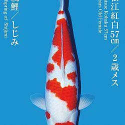 De Tategoi Kai: afbeelding 19