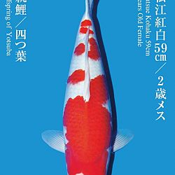 De Tategoi Kai: afbeelding 20