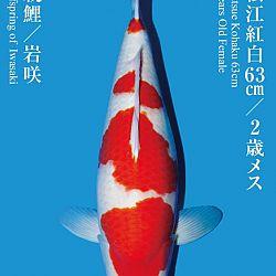 De Tategoi Kai: afbeelding 22