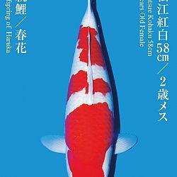 De Tategoi Kai: afbeelding 23