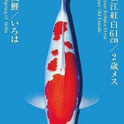 De Tategoi Kai: afbeelding 24