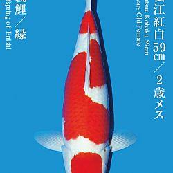 De Tategoi Kai: afbeelding 25