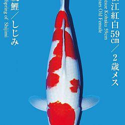 De Tategoi Kai: afbeelding 26