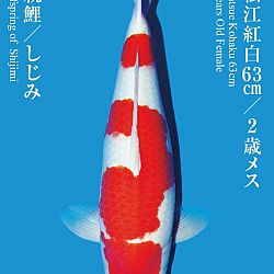 De Tategoi Kai: afbeelding 27