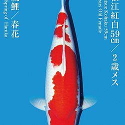 De Tategoi Kai: afbeelding 28