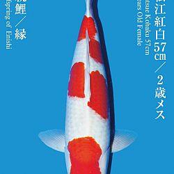 De Tategoi Kai: afbeelding 29
