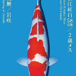 De Tategoi Kai: afbeelding 30