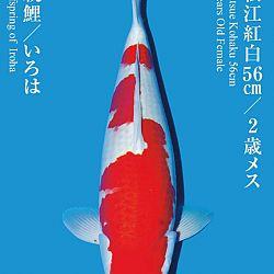 De Tategoi Kai: afbeelding 31