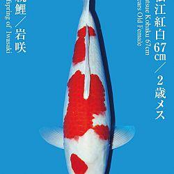 De Tategoi Kai: afbeelding 32