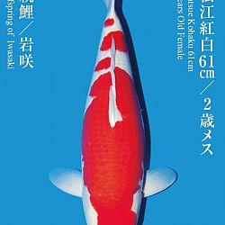 De Tategoi Kai: afbeelding 34