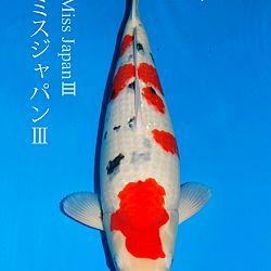 De veiling van Sakai: afbeelding 2