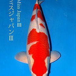 De veiling van Sakai: afbeelding 3