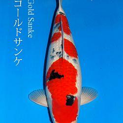 De veiling van Sakai: afbeelding 4