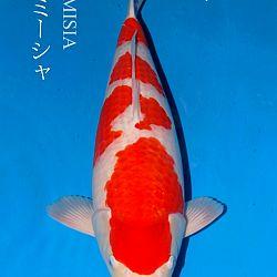 De veiling van Sakai: afbeelding 5
