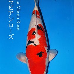 De veiling van Sakai: afbeelding 6