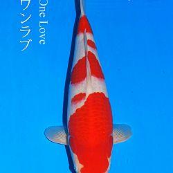 De veiling van Sakai: afbeelding 8