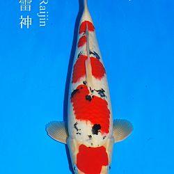 De veiling van Sakai: afbeelding 9