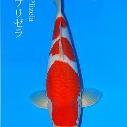 De veiling van Sakai: afbeelding 10