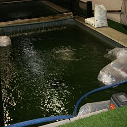 De vissen zwemmen hun baantjes: afbeelding 2