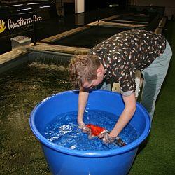 De vissen zwemmen hun baantjes: afbeelding 5