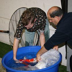 De vissen zwemmen hun baantjes: afbeelding 6