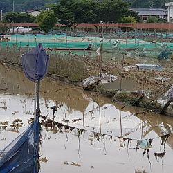 Dramatische ontwikkeling in Japan: afbeelding 3