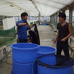 Een dag op de Momotaro Koifarm: afbeelding 9