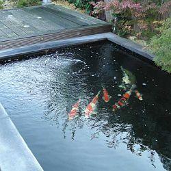 Een duik in het verleden: afbeelding 6