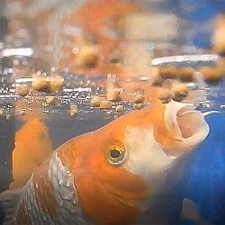 Een onderwater symfonie: afbeelding 2