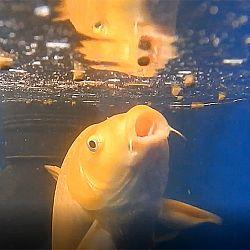Een onderwater symfonie: afbeelding 3