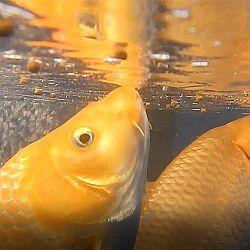 Een onderwater symfonie: afbeelding 1