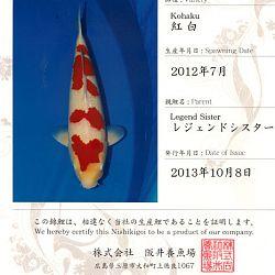 Een sanke en 2 kohaku: afbeelding 2