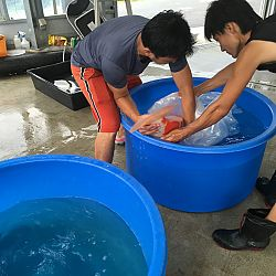 Exclusief shipment bij Momotaro: afbeelding 3