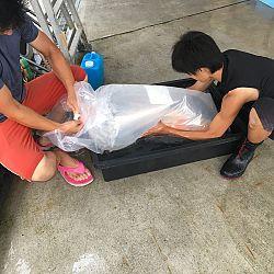 Exclusief shipment bij Momotaro: afbeelding 5