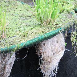 Hoe leg je een plantenfilter aan: afbeelding 5