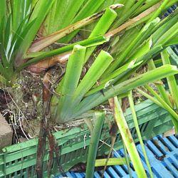Hoe leg je een plantenfilter aan: afbeelding 6