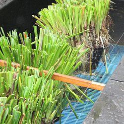 Hoe leg je een plantenfilter aan: afbeelding 7