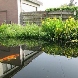Hoe leg je een plantenfilter aan: afbeelding 15